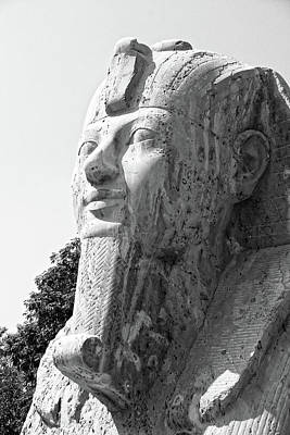 Photograph - Small Sphinx Bw by Darcy Michaelchuk
