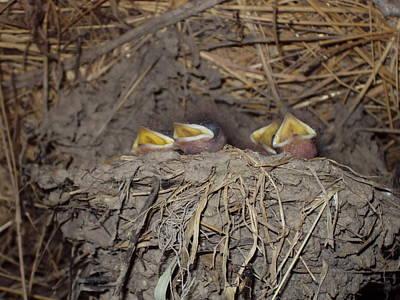 Small Swallows Original by David Du Hempsey