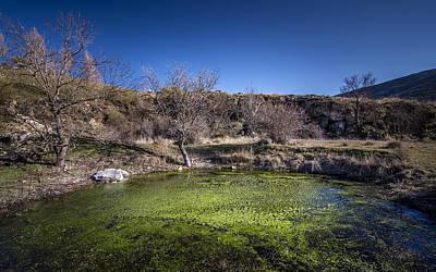 Photograph - Small Swamp by Hernan Bua