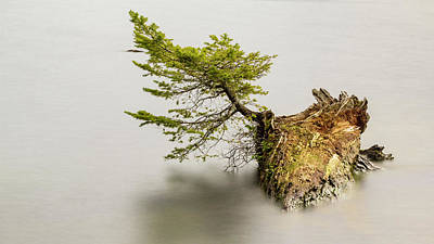 Photograph - Small Tree On A Stump by Tony Locke