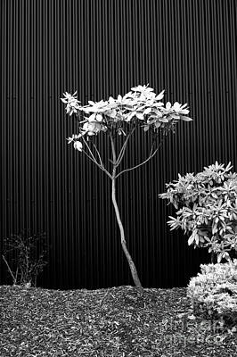 Photograph - Small Tree Urban Setting by Jim Corwin