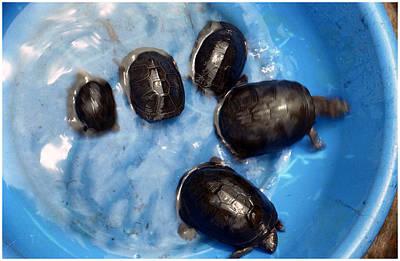 Photograph - Small Turtles by Muyiwa OSIFUYE