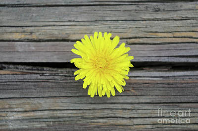 Photograph - Small Yellow Details One by John S