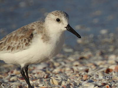 Photograph - Smallest Bird by Frank Williams