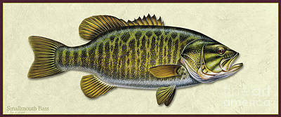 Painting - Smallmouth Bass Id by Jon Q Wright