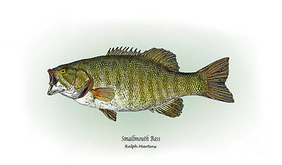 Angling Painting - Smallmouth Bass by Ralph Martens