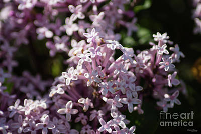 Photograph - Smell That Lilac by Jennifer White