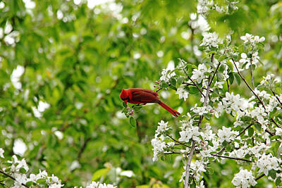 Photograph - Smell The Flowers Along The Way by Debbie Oppermann