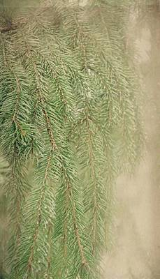 Photograph - Smell The Pine by Angie Tirado