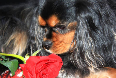 Smelling The Red Rose Art Print
