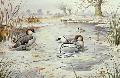 Wildfowl Painting - Smew by Carl Donner