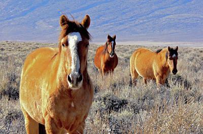 Smile - Mustang Mares Of Eastern Sierra  Art Print