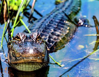 Photograph - Smiley by Ken Frischkorn