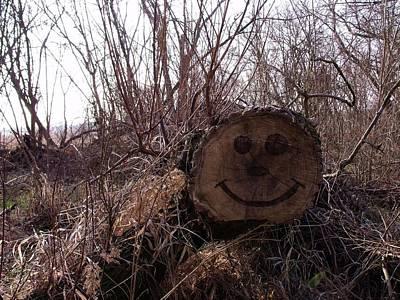 Smiley Log Art Print by Anna Villarreal Garbis