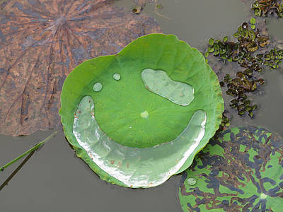 Photograph - Smiley Waterlily by Phil Stone