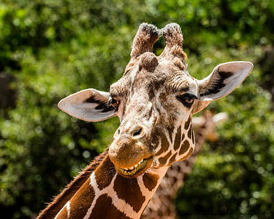 Cheyenne Mountain Zoo Photograph - Don't Worry ...be Happy by John Bartelt