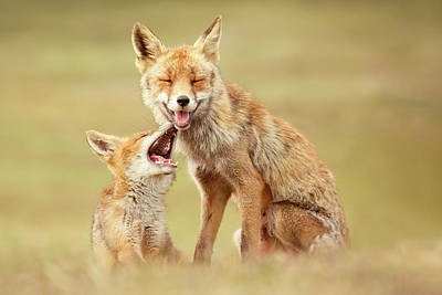 Smiling Foxes On World Smile Day Art Print