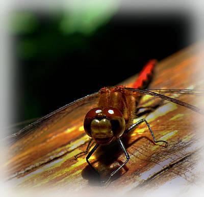Friendly Digital Art - Smiling Friendly Dragonfly by Lilia D