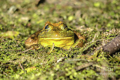 Photograph - Smiling Frog by Cheryl Baxter