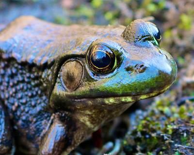 Photograph - Smiling Frog by Polly Castor