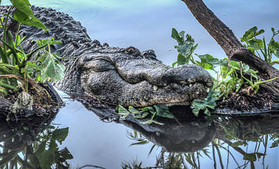 Photograph - Smiling Gator by Jane Luxton