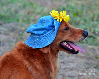 Smiling Golden Retriever In Hat Art Print by Catherine Sherman