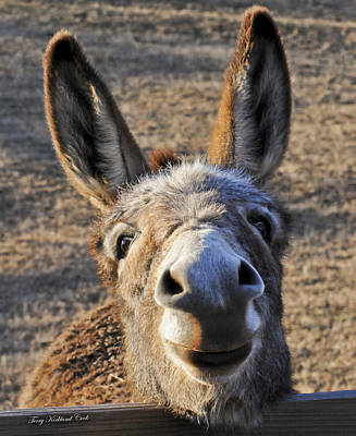 Burros Photograph - Smiling Jenny  by Terry Kirkland Cook