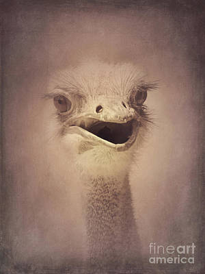 Photograph - Smiling Ostrich by Chris Scroggins