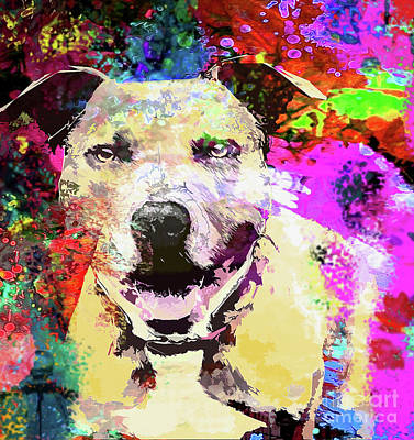 Pitbull Wall Art - Photograph - Smiling Pitbull by Jon Neidert