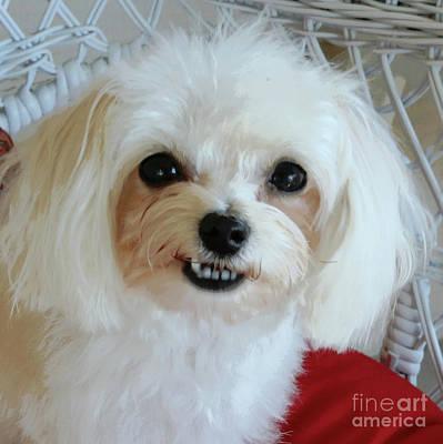 Smiling Puppy Art Print by Carol Groenen