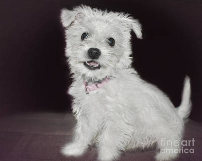 Photograph - Smiling Puppy by Terri Waters