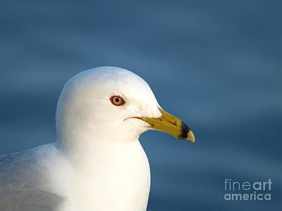Photograph - Smiling Seagull by Susan Dimitrakopoulos