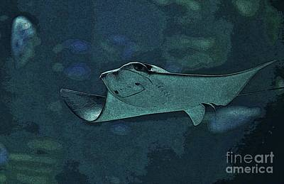 Photograph - Smiling Stingray by Craig Wood
