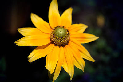 Photograph - Smiling Sun by Milena Ilieva