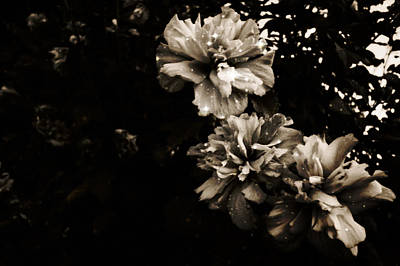 Photograph - Smoke Flowers Enchanted by Marisela Mungia