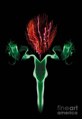 Photograph - Smoke Thistle by Roger Monahan