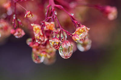 Photograph - Smoketree In The Rain by Robert Potts