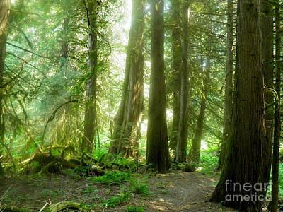 Photograph - Smokey Forest by Ida Eriksen