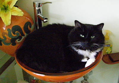 Art Print featuring the photograph Smokey In Wash Bowl by Jeanette Oberholtzer