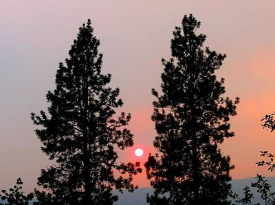 Photograph - Smokey Okanagan Sunset by Will Borden