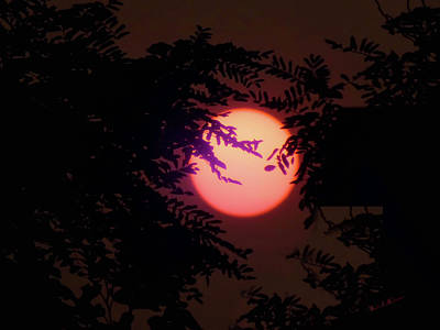 Photograph - Smokey Oregon Sun by Wendy McKennon