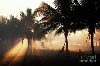 Photograph - Smokey Palms by Tim Gainey