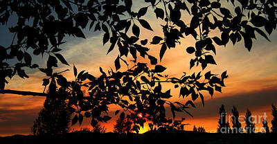Photograph - A Dusty Sunset by Janice Westerberg