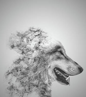 Wolf Wall Art - Photograph - Smokey Wolf by Martin Newman