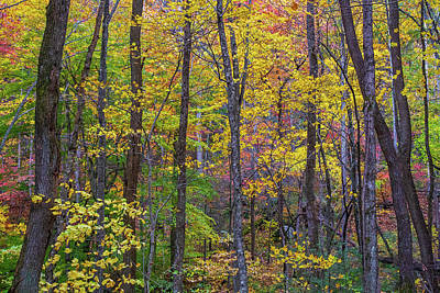Photograph - Smokies Fall Colors by Stefan Mazzola
