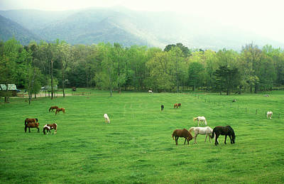 Photograph - Smokies Horses by John Burk