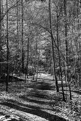 Photograph - Smokies Trail Black And White by Sharon Popek