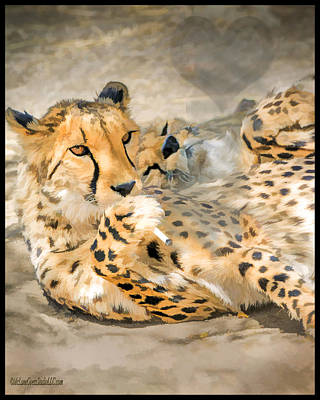 Photograph - Smokin Cheetah Love by LeeAnn McLaneGoetz McLaneGoetzStudioLLCcom