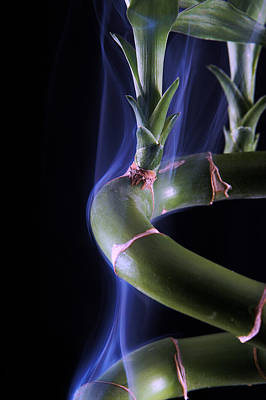 Photograph - Smoking Bamboo by Avril Christophe