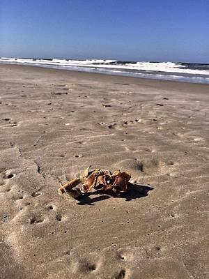 Photograph - Smoking Kills Crab by Lisa Piper